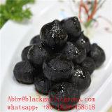 Het Enige Zwarte Knoflook van uitstekende kwaliteit