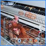 Gaiola das codorniz da camada do equipamento da casa para a exploração avícola