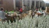 Groene Kunstmatige PE van de Kerstboom Installatie