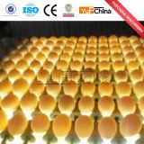 Classement des oeufs de la machine de tri pour l'usine de transformation des oeufs