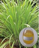 Petróleo de citronela da matéria- prima das folhas para sabões/sabores