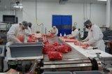 Nahrungsmittelgrad-Rindfleisch-Schweinefleisch-Produktionszweig modularer Bandförderer