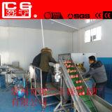 Modelo Dw Fatia de mandioca contínuo do secador/secador do Transportador de Correia/secador de banda