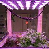 Barre d'éclairage à LED de sécurité croître pour les cultures de plantes