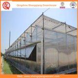 로즈 감자를 위한 정원 또는 농장 또는 갱도 다중 경간 폴리탄산염 장 녹색 집