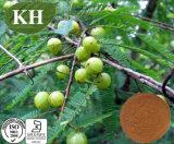 Pó indiano antienvelhecimento natural elevado da erva do Gooseberry