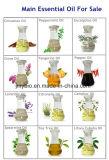 Natuurlijk Ingrediënt 100% van de Olie van de Massage de Zuivere Natuurlijke Essentiële Olie van het Citroengras