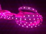 30 PCS RGB LED SMD LED Flexível Digital5050 à prova de faixa de néon 12V 24V Dimerizável forma redonda 2825 SMD LED 360 graus de Neon Flex