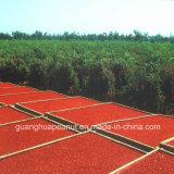 Bacca organica del Ningxia secca migliore qualità Goji dalla Cina
