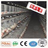 중국 공급자 중대한 가격을%s 가진 전기판에 의하여 직류 전기를 통하는 보일러 닭 감금소 3개의 층