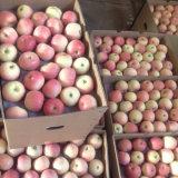 Proveedor confiable de manzana fresca de la gala