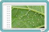 Bestandteil Wdg Verbundinsektenvertilgungsmittel Pymetrozine Nitenpyram 60%+20% synergistischer Agens
