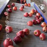 Hight Quality Fresh Huaniu Apple, FUJI Apple, Qinguan Apple