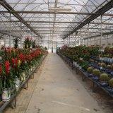 Invernadero del jardín de la hoja de la PC/de la hoja del policarbonato para la flor