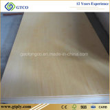 4X8FT 3/4 de madeira compensada UV do vidoeiro, madeira compensada do corte do laser, madeira compensada Finished do vidoeiro da madeira compensada