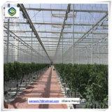 Парник листа PC фабрики Китая Hydroponic для томата