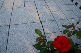 Azulejo de piedra del Decking del granito del suelo del jardín de la naturaleza con la base del PE