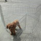 Pluma del ejercicio, jaula, jaula grande del perro, jaula de Rabit del gato, jaula del loro, pluma del ejercicio