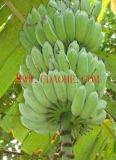 Het Poeder van het Aminozuur van de levering