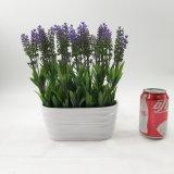 Lavanda di ceramica artificiale delle piante di grande formato fertile conservata in vaso