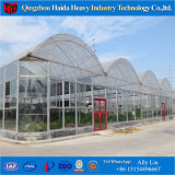 Glass Cover Material Glass Venlo Greenhouse for Cucumber