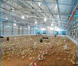 강철 구조물 닭 흘려지는 가벼운 강철 구조물은 가축/양 /Poultry를 위해 농장 흘렸다