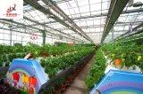 호의를 베푸는 가격 및 좋은 품질에 있는 중국 제조자 온실