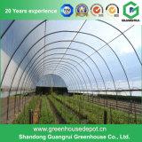 Serre chaude de film de PE de bâti en acier d'agriculture pour culture de légumes