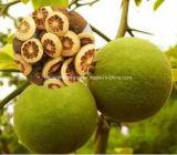 Extrait Tangeretin 98% CAS481-53-8 de fruit d'Aurantium de citron