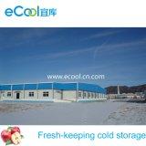 Caminhada no quarto frio de mantimento fresco da distribuição da logística para a produção/o processamento das frutas dos vegetais