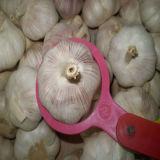 чеснок 4.5-5.0cm свежий нормальный белый с высоким качеством