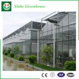 Invernadero de cristal comercial para el Seeding