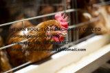Hete het Huis van het Gevogelte van het Landbouwbedrijf van de kip Verkopend een Coops van de Kooien van de Kip van de Kip van het Type Apparatuur van het Landbouwbedrijf