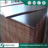 Álamos/abedul/núcleo de madera de contrachapado marino/encofrados de madera contrachapada/Película enfrentó la madera contrachapada