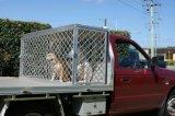 Jaulas de aluminio al por mayor del perro del Ute