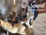 Explorador veterinario Sonovet del ultrasonido de la palma de Meditech