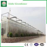 Invernadero de cristal de Venlo de la agricultura de los sistemas de control del Multi-Palmo