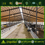 Сборные стальные структуры крупного рогатого скота дом дизайн Коровник
