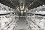 Cage de poulet de viande avec le système automatique de matériel pour le fermier (un type)