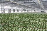 온실 공기 통풍기 가금 농장 공기 통풍기 배기 엔진