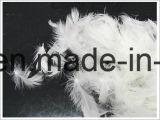Gewassen Witte Veer 24cm van de Eend voor Dekbed (IDFL, V.S.-2000, EN12934, JIS, GB/T17685-2016)