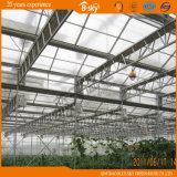 Invernadero largo del vidrio de la estructura de Venlo de la vida útil de la alta calidad