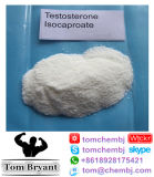 아주 긴 에스테르 신진대사 스테로이드 테스토스테론 Isocaproate 처리되지 않는 분말