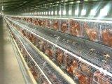 Клетка цыпленка хорошего качества для птицефермы клетки птицы надувательства