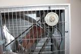 De CentrifugaalVentilator van uitstekende kwaliteit van de Uitlaat duw-Pul Industriële Ventilationl met Lage Prijs