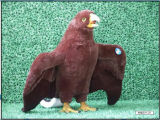 Juguete de peluche - Hawk