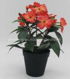Fiore reale di Impatients di tocco della decorazione domestica
