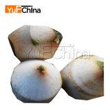 Vente de machine d'écaillement de peau de noix de coco de prix intéressant de modèle moderne