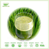 Gewicht-Verlust ergänzt Gersten-Gras-Puder