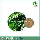 20%~60% Oleuropein-olivgrüner Blatt-Auszug, 100% natürlich
